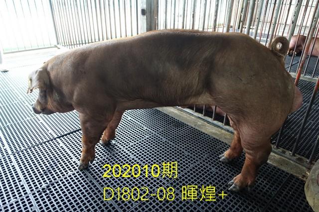 中央畜產會202010期D1802-08拍賣照片