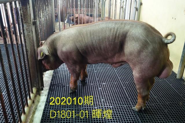 中央畜產會202010期D1801-01拍賣照片
