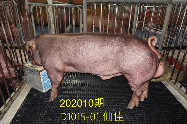 中央畜產會202010期D1015-01拍賣照片