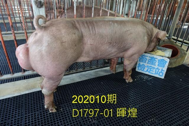 中央畜產會202010期D1797-01拍賣照片