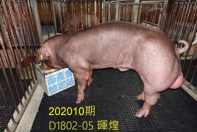 中央畜產會202010期D1802-05拍賣照片