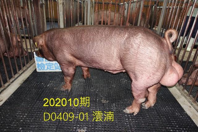 中央畜產會202010期D0409-01拍賣照片