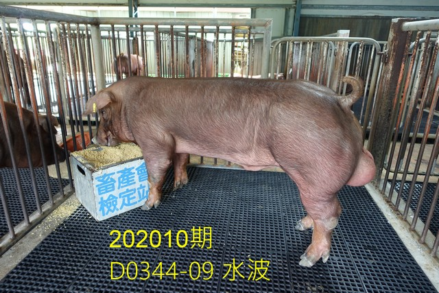 中央畜產會202010期D0344-09拍賣照片