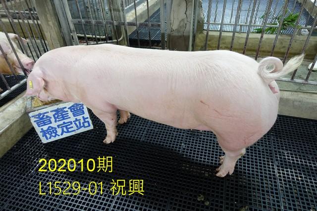 中央畜產會202010期L1529-01拍賣照片