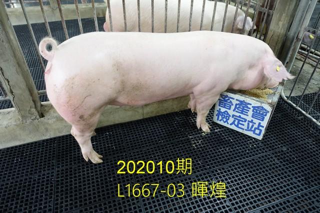 中央畜產會202010期L1667-03拍賣照片