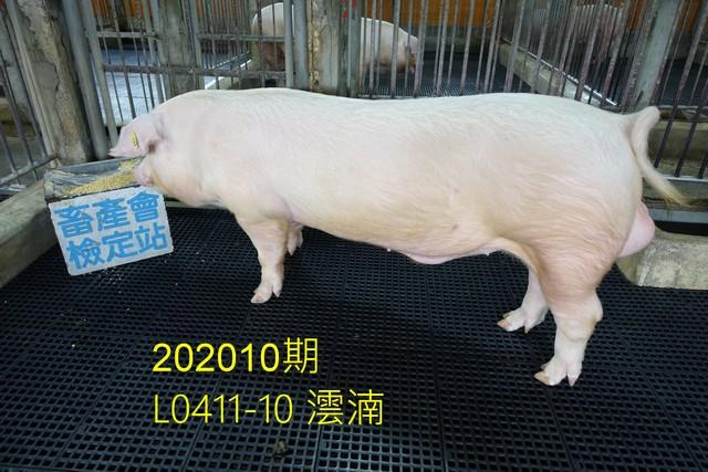 中央畜產會202010期L0411-10拍賣照片