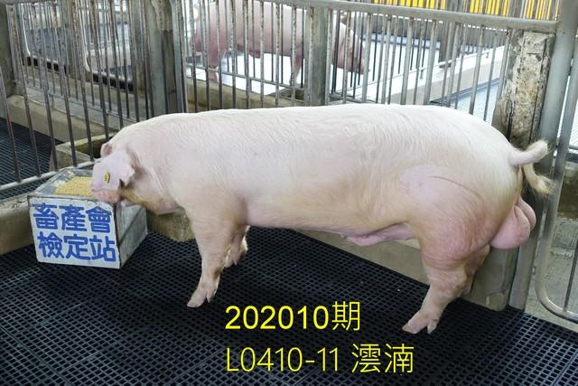 中央畜產會202010期L0410-11拍賣照片