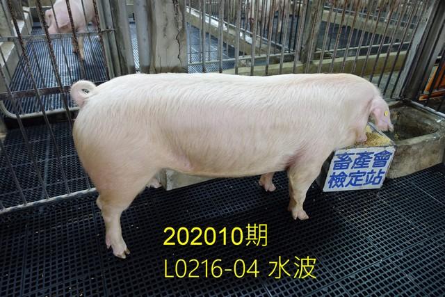 中央畜產會202010期L0216-04拍賣照片