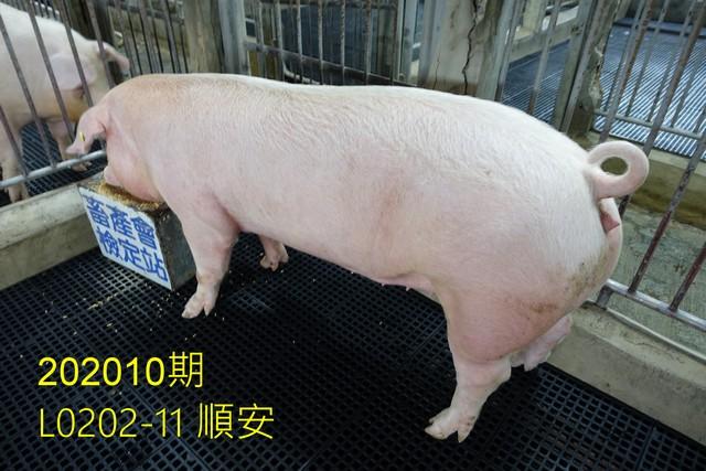 中央畜產會202010期L0202-11拍賣照片