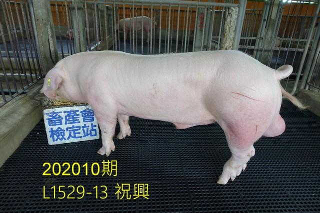 中央畜產會202010期L1529-13拍賣照片