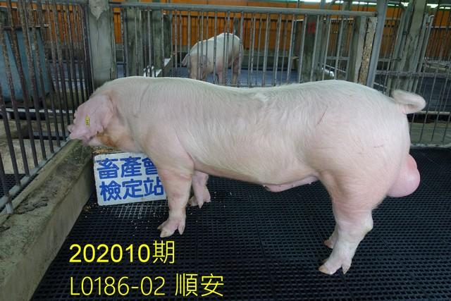 中央畜產會202010期L0186-02拍賣照片