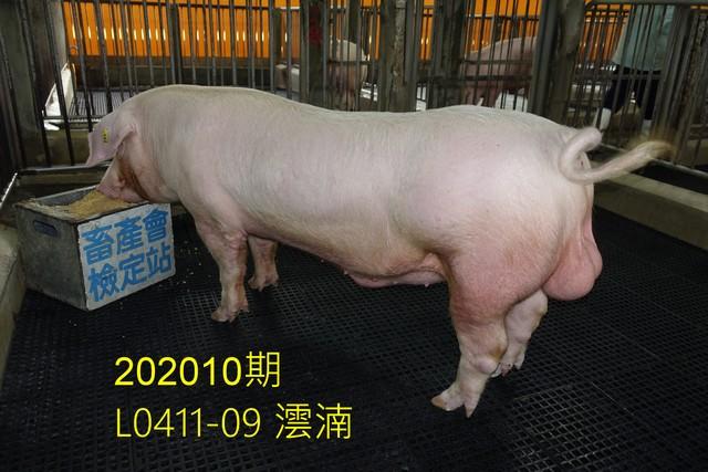 中央畜產會202010期L0411-09拍賣照片