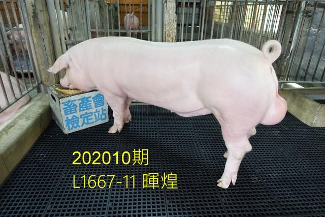 中央畜產會202010期L1667-11拍賣照片