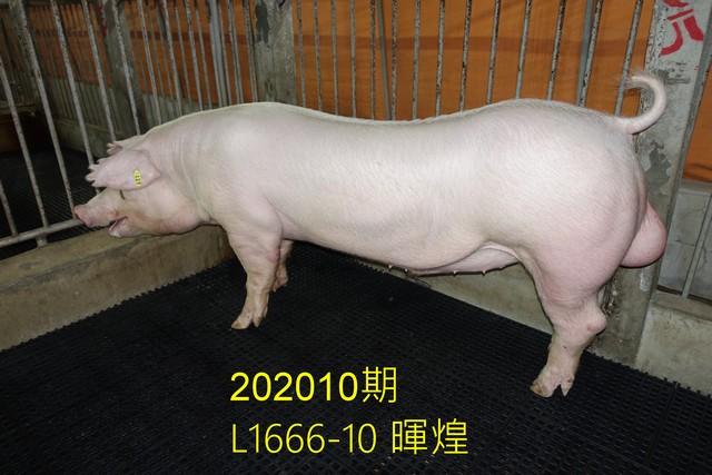 中央畜產會202010期L1666-10拍賣照片