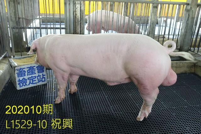 中央畜產會202010期L1529-10拍賣照片
