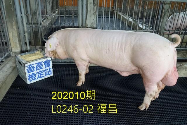 中央畜產會202010期L0246-02拍賣照片
