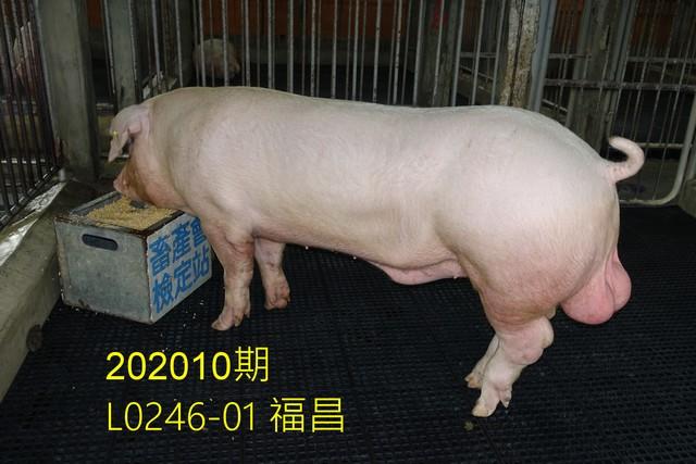 中央畜產會202010期L0246-01拍賣照片