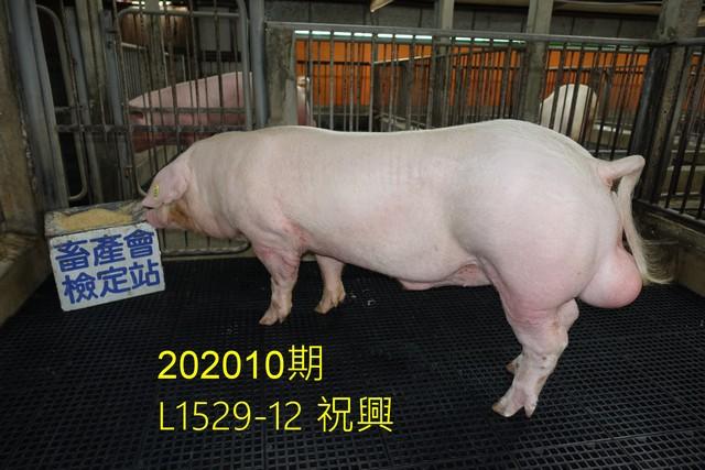 中央畜產會202010期L1529-12拍賣照片