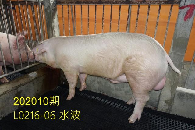 中央畜產會202010期L0216-06拍賣照片