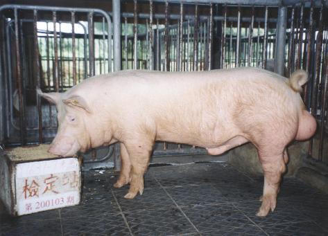 中央畜產會200103期Y1637-07拍賣照片
