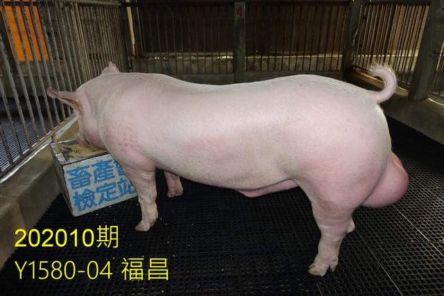 中央畜產會202010期Y1580-04拍賣照片