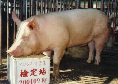 中央畜產會200109期Y1142-04拍賣照片