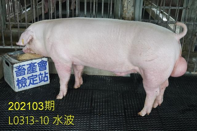 中央畜產會202103期L0313-10拍賣照片