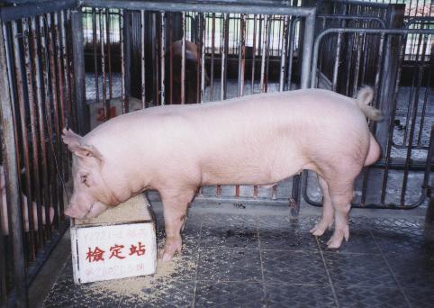 中央畜產會200203期Y1721-04拍賣照片