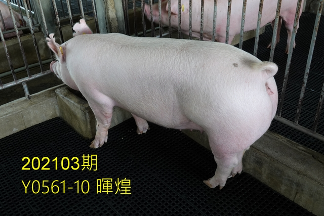 中央畜產會202103期Y0561-10拍賣照片