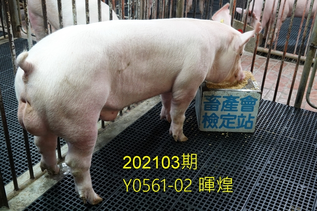 中央畜產會202103期Y0561-02拍賣照片