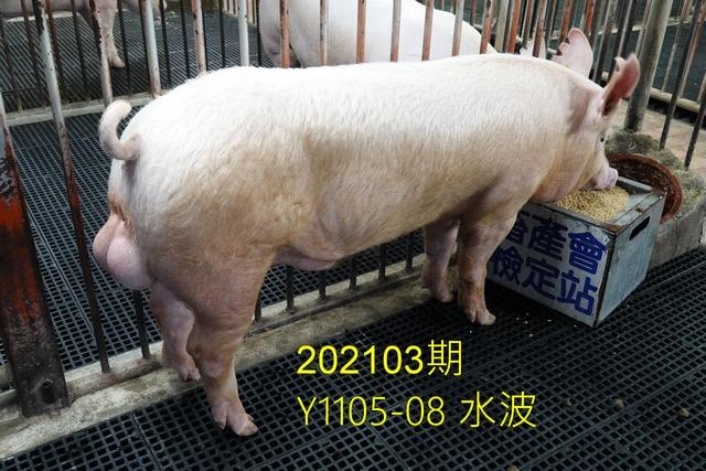 中央畜產會202103期Y1105-08拍賣照片