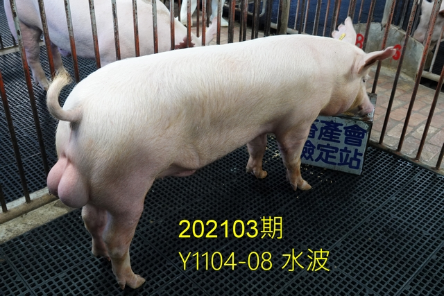 中央畜產會202103期Y1104-08拍賣照片