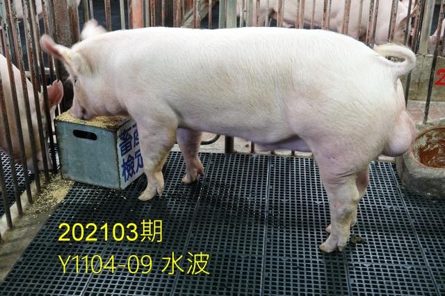 中央畜產會202103期Y1104-09拍賣照片