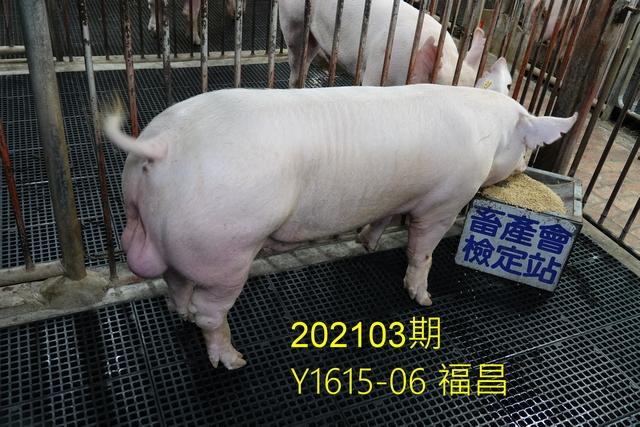 中央畜產會202103期Y1615-06拍賣照片