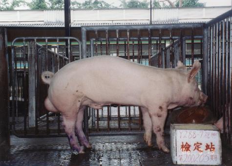 中央畜產會200205期Y0288-07拍賣照片