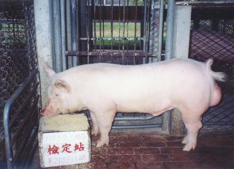 中央畜產會200211期Y1739-03拍賣照片