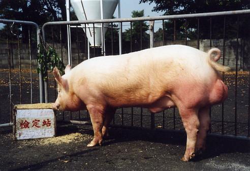 中央畜產會200307期Y0043-01拍賣照片