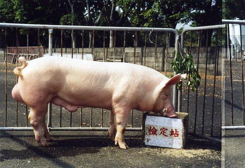 中央畜產會200307期Y0091-01拍賣照片