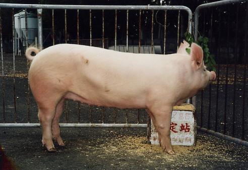 中央畜產會200307期Y0091-12拍賣照片