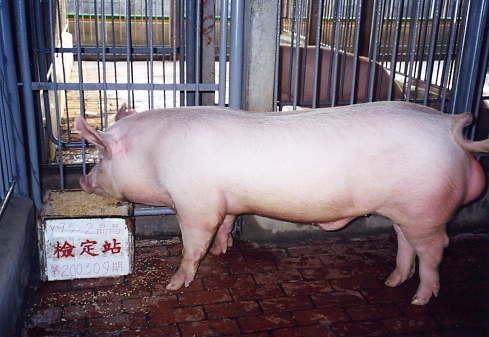 中央畜產會200309期Y0095-02拍賣照片