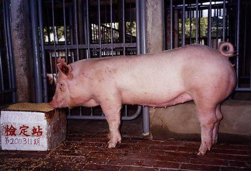 中央畜產會200311期Y1790-17拍賣照片