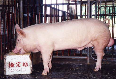 中央畜產會200401期Y0002-03拍賣照片