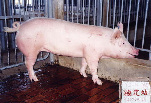 中央畜產會200401期Y0002-14拍賣照片