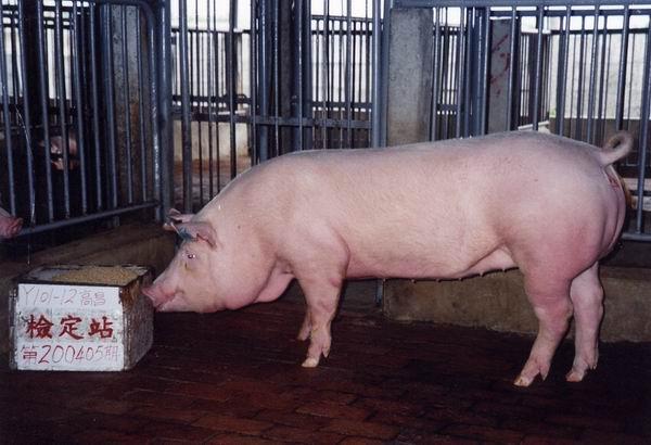 中央畜產會200405期Y0101-12拍賣照片