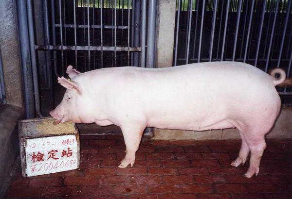 中央畜產會200406期Y0163-11拍賣照片