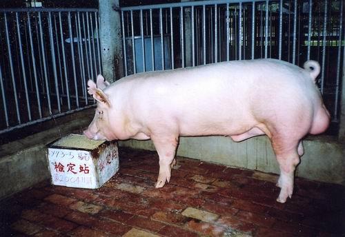 中央畜產會200411期Y0073-05拍賣照片