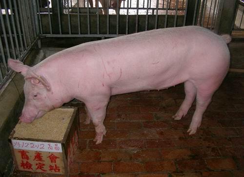 中央畜產會200503期Y0122-12拍賣照片
