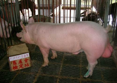 中央畜產會200503期Y0232-03拍賣照片