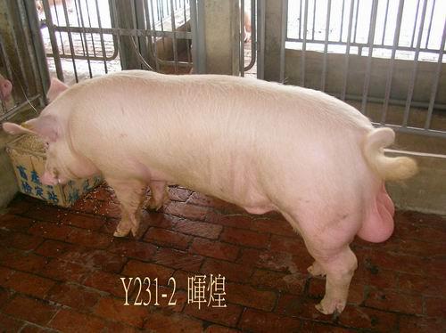 中央畜產會200504期Y0231-02拍賣照片