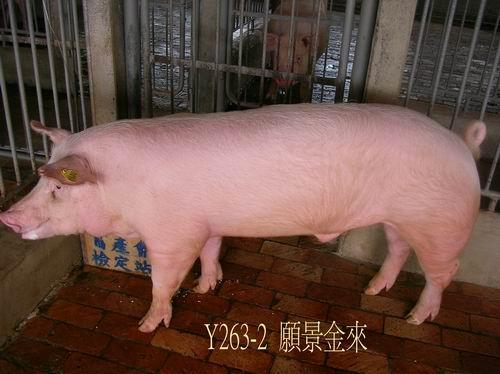 中央畜產會200504期Y0263-02拍賣照片